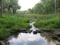 The Scuppernong Spring