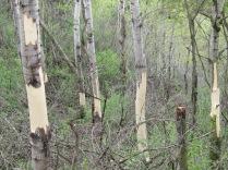 Lone Tree Bluff