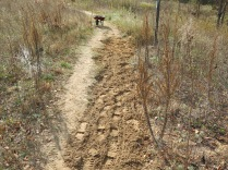 were used to start filling the gully at the spur trail junction.