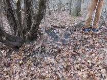horribly degraded buckthorn thicket