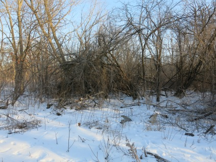 We'll start one pile under the buckthorn arch