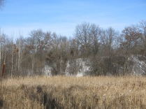 The hillside rim around the wetland is thick with buckthorn