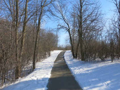 An asphalt path, widely mowed passing through a buckthorn thicket on either side.