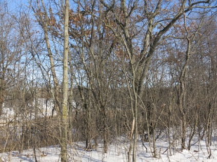 The view north or to the left as we walk the path would be stunning absent the buckthorn brush