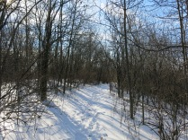 """There is a little spur """"trial"""" that leads to the high ground above the wetland we first saw from Maple Avenue at #1"""