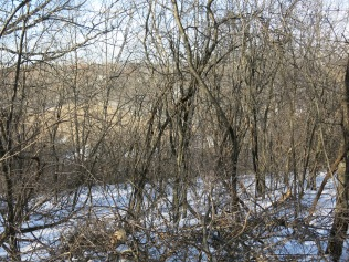 The wetland below is the one we first encountered at #1 along Maple Avenue, here seen from the east rim