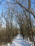 a buckthorn tunnel