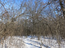 """I don't think this """"trail"""" gets much traffic in the summer when the buckthorn is in full bush"""