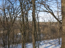 Obscured by buckthorn, the view from the east side of the park into the wetland