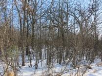 Nice oaks nearby