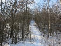 A trail up to oak ridge
