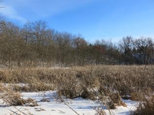 #14 emerging into the big open wetlands