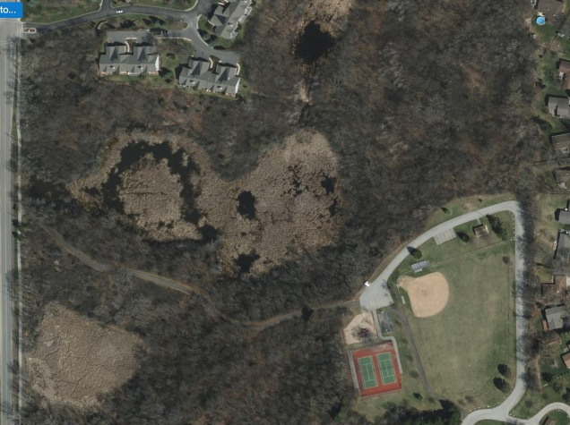 2015, the trails in the center-right area are completely overgrown with buckthorn.