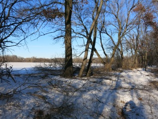 We opened a huge swath between the farm field and the channel at the base of the railroad bed.