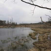 One of the many wetlands