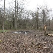 Just beyond the fire ring is a wall of buckthorn and behind that an old irrigation ditch draining the wetland to the north.