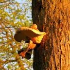 Interesting fungus