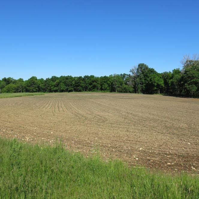 The Cornfields ofHartland