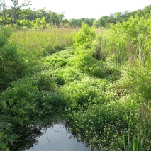 Watercress River