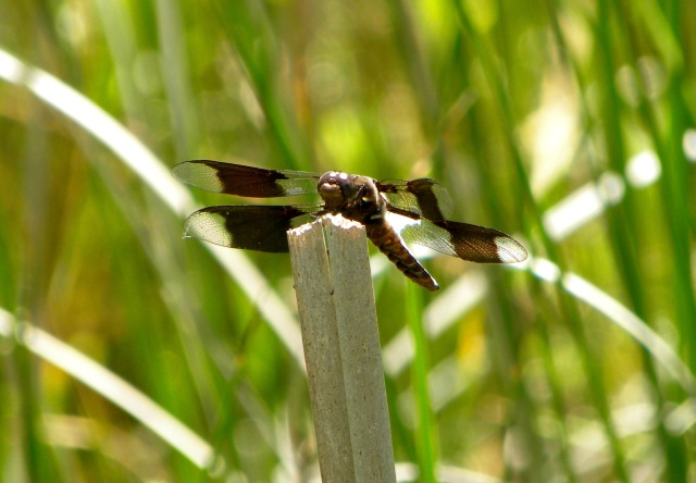 dragonfly A 06:03